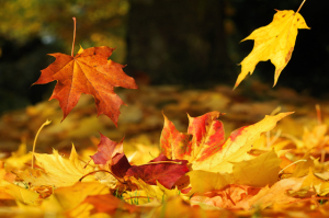 őszi-szélI